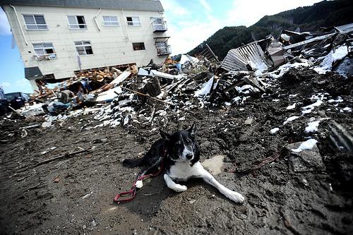 東日本大震災から5年たった。