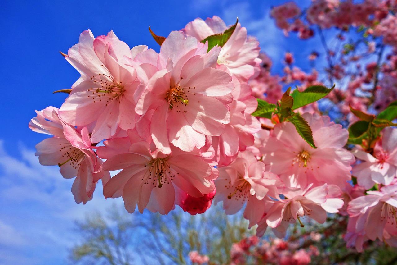 4月1日、新年度の始まり、新元号の発表